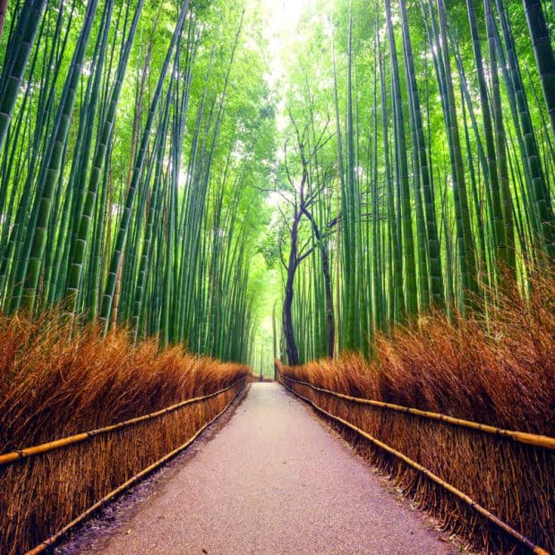 The bamboo forests that surround the southern ninja village.