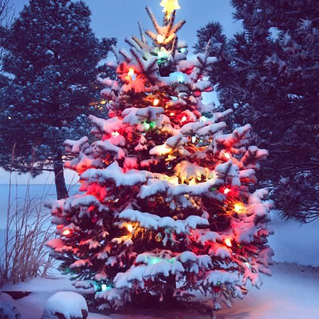 Japan Christmas.Christmas In Japan S J Pajonas
