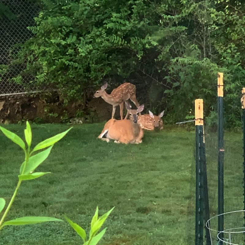 All the things that happened in the week ending August 4, 2019 including plenty of deer, cleaning out the basement, and the beginning of a new month!