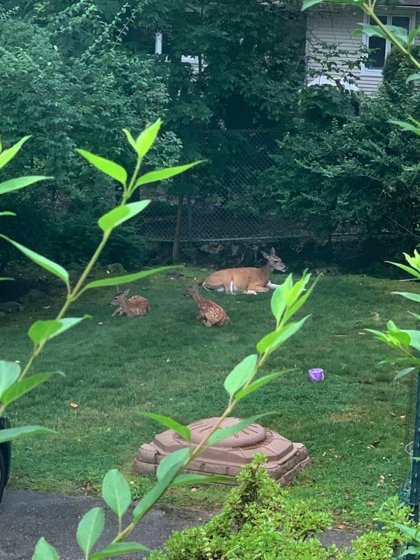 All the things that happened in the week ending August 18, 2019 including the beginning of pottery camp for the kids, lots of iffy August weather, deer in the yard, and brownies!