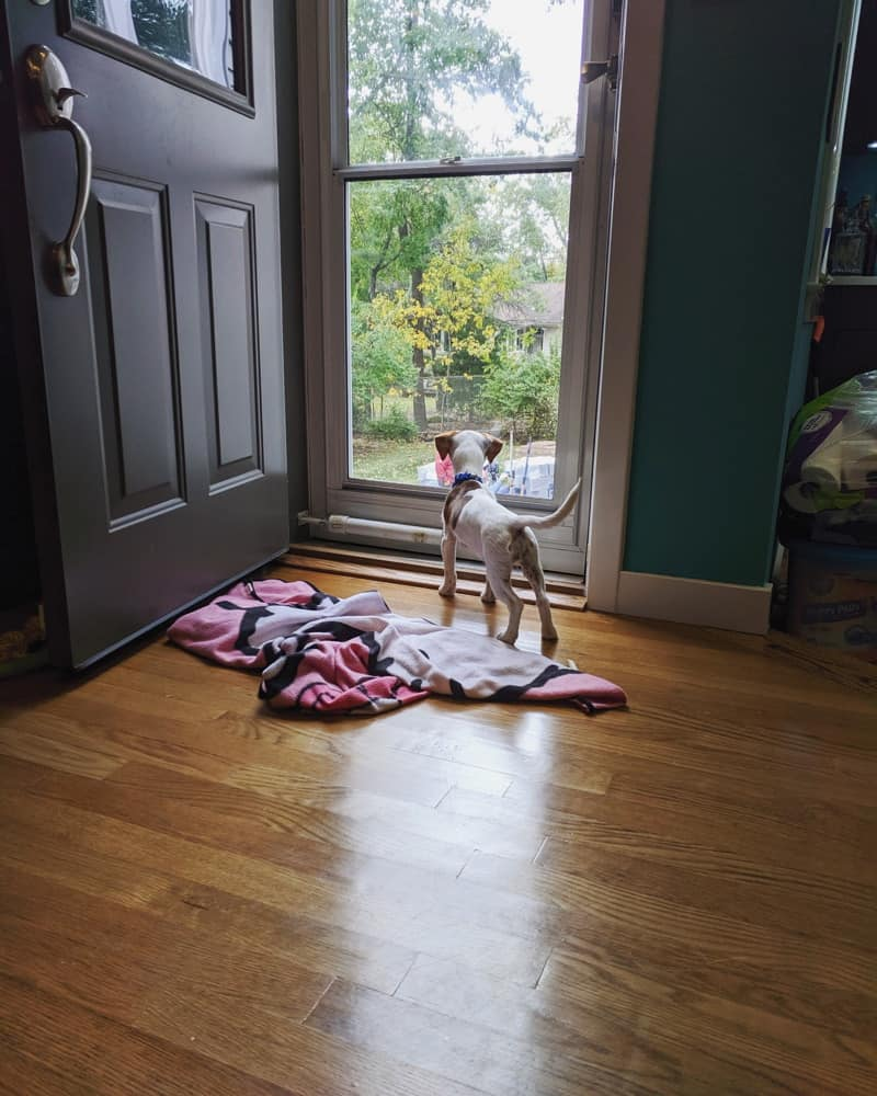 All the things that happened in the week ending October 20, 2019 including our adoption of Lulu, backyard landscaping, and progress on Flyght 5.